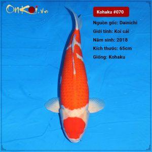070 Kohaku 44cm 2 nam