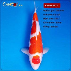071 Ginrin Kohaku 50 cm 3 tuoi 50 cm