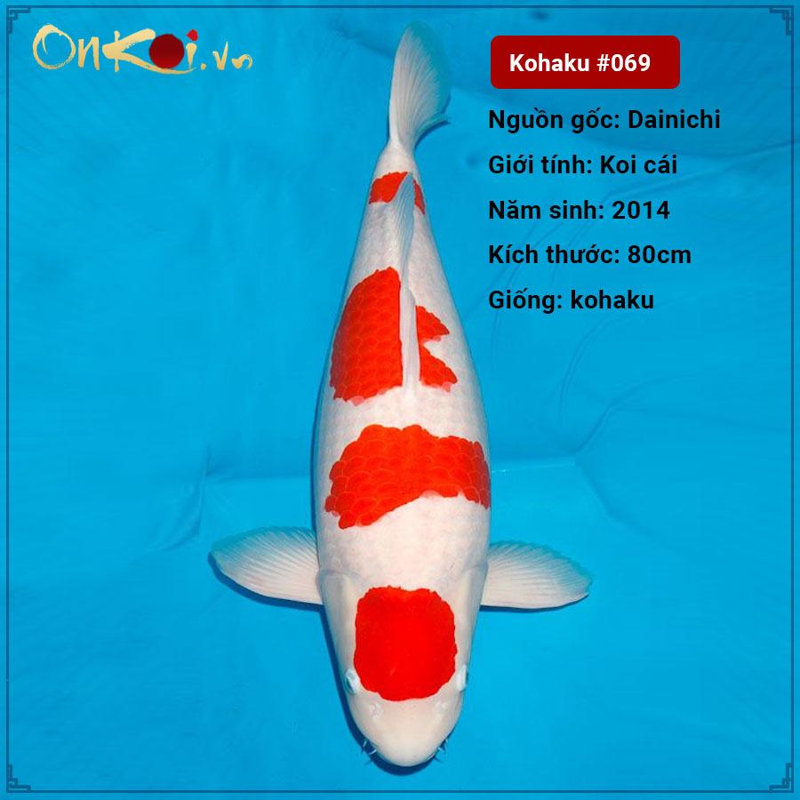 69 Kohaku 6 nam 80cm 1