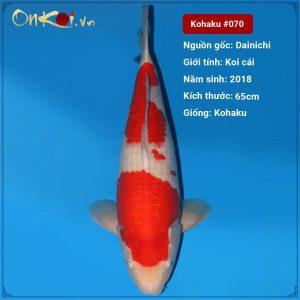 Koi Kohaku 65 cm 2 năm tuổi #070