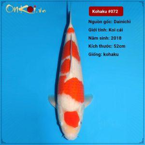 72 Kohaku 52 cm 2 nam