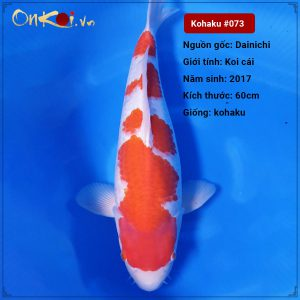 73-Kohaku-60-cm-3-nam