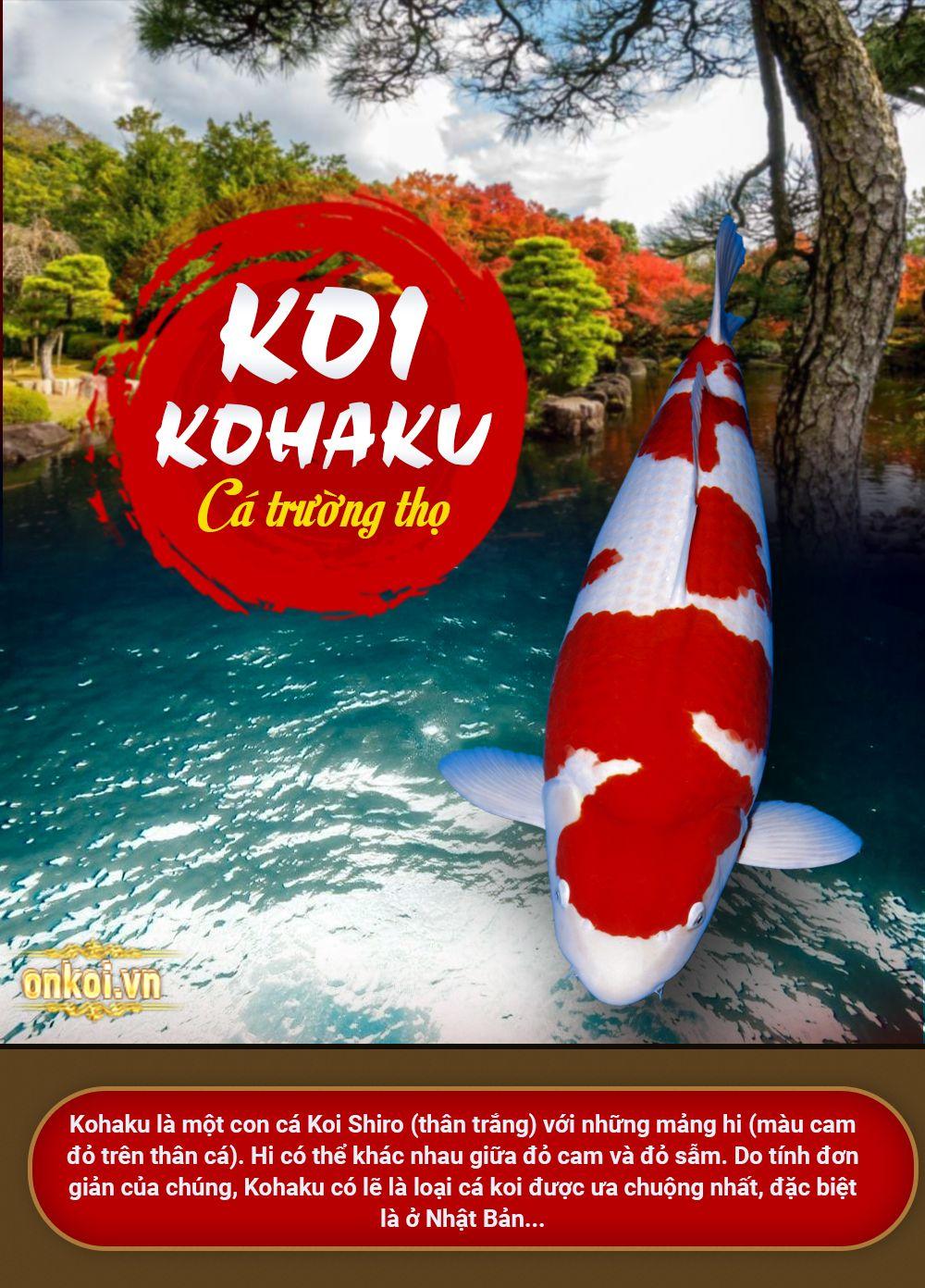 ảnh giới thiệu về kohaku