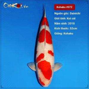 Kohaku 52cm 3 năm tuổi #072