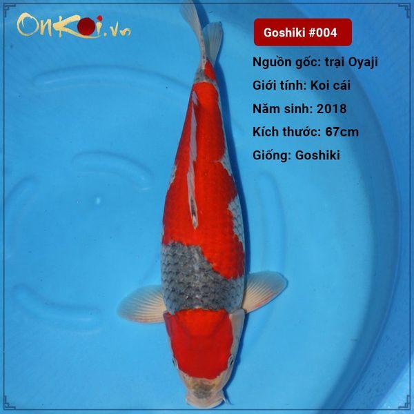 Koi Goshiki 67 cm 2 năm tuổi #004