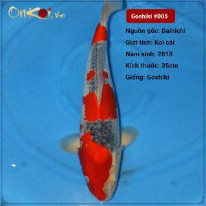Set 6 Koi Goshiki 50cm – 55 cm 1 tuổi #005