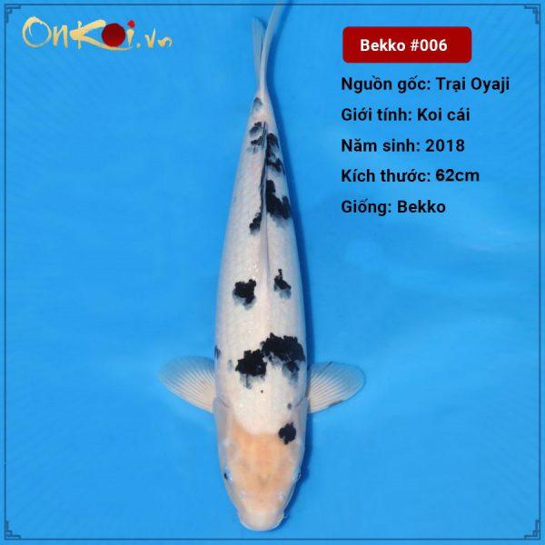Koi Bekko 62cm 2 tuổi nữ #006