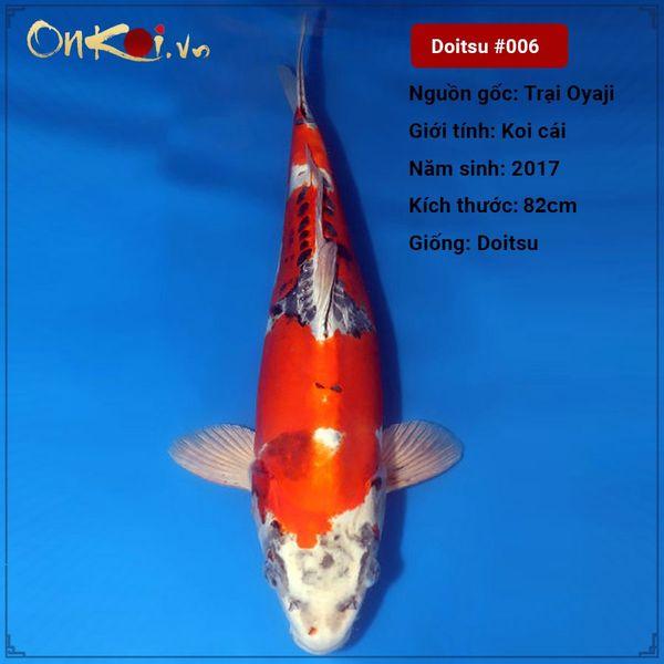 Koi Doitu 82 cm 3 năm tuổi #006