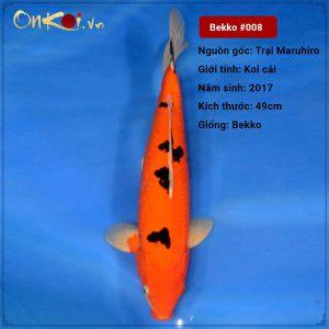 Koi Bekko 65cm 2 năm tuổi #008