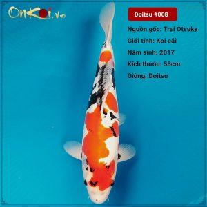 Koi Doitsu 83 cm 3 năm tuổi #008