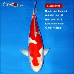 Onkoi Kohaku 68 cm 2.5 tuổi nữ #091