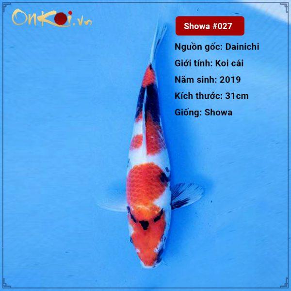 #27 Showa 31 cm 1 năm tuổi