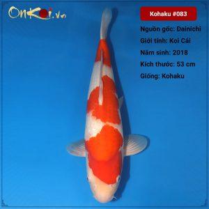 Koi Kohaku 53 cm 2 tuổi