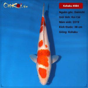 Koi Kohaku 38 cm 1 tuổi