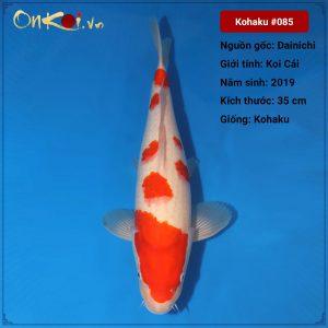 Koi Kohaku 35 cm 1 tuổi #85