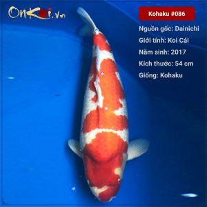 Koi Kohaku 53 cm 3 tuổi #86