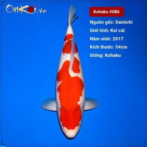Koi Kohaku 54 cm 3 tuổi #086