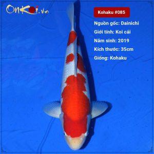 Koi Kohaku 35 cm 1 tuổi #085