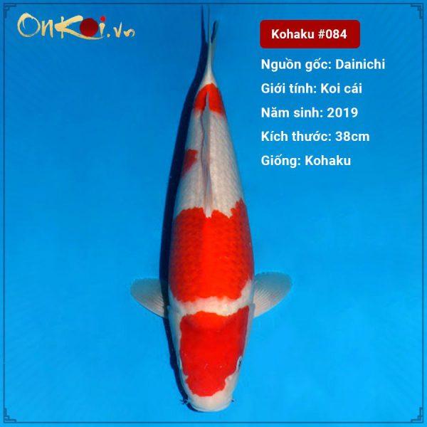 Koi Kohaku 38 cm 1 tuổi #084