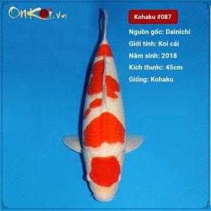 Koi Kohaku 45 cm 2 năm tuổi #087