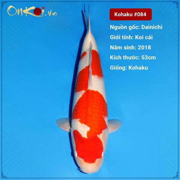 Koi Kohaku 53 cm 2 tuổi #083