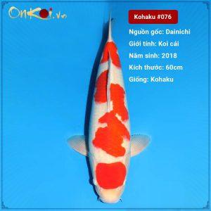 Kohaku 2 năm tuổi 60 cm #076