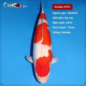 Koi Nidan Kohaku 73cm 4 năm tuổi #078