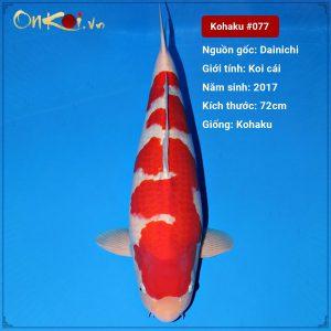 Kohaku 72cm 3 năm tuổi #077
