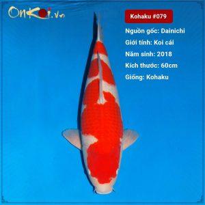 Koi Kohaku Sanke 60cm 3 năm tuổi #079