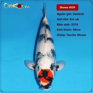 OnKoi-Tancho Showa 68 cm 2.5 năm tuổi #039