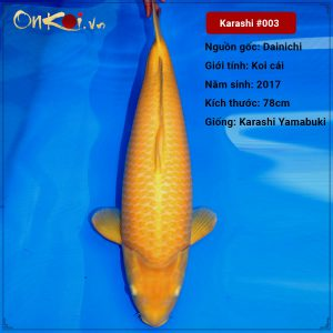 Karashi Yamabuki 78 cm 3 tuổi nữ #003
