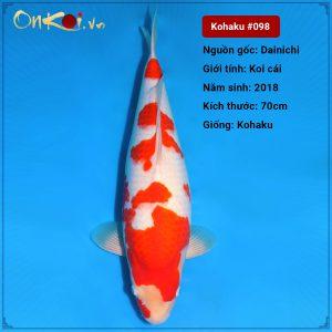 Onkoi Kohaku set 8 con 70 cm 2 tuổi #098