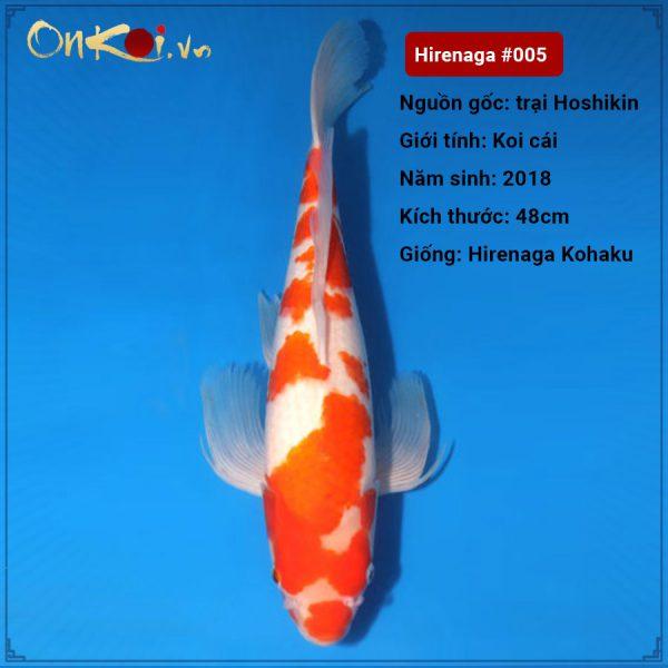 Hirenaga Kohaku 57 cm 2 tuổi #005