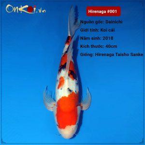 Koi Hirenaga Taisho Sanke 66 cm 2 tuổi #001
