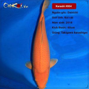 Koi Karashigoi 60 cm 2 tuổi #004