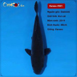 Koi Karasu 48 cm 1 tuổi #001