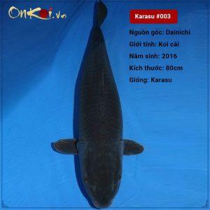 Karasu 80cm 4 tuổi #003