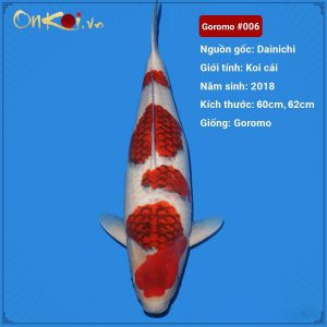 Set 2 Koi Goromo 60-62 cm #006