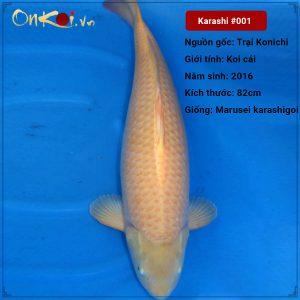 Koi Karashi 82 cm 4 năm tuổi #001