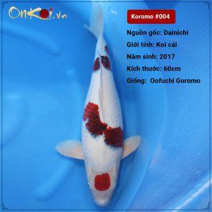 Koi Oofuri Goromo 60cm 3 năm tuổi #004