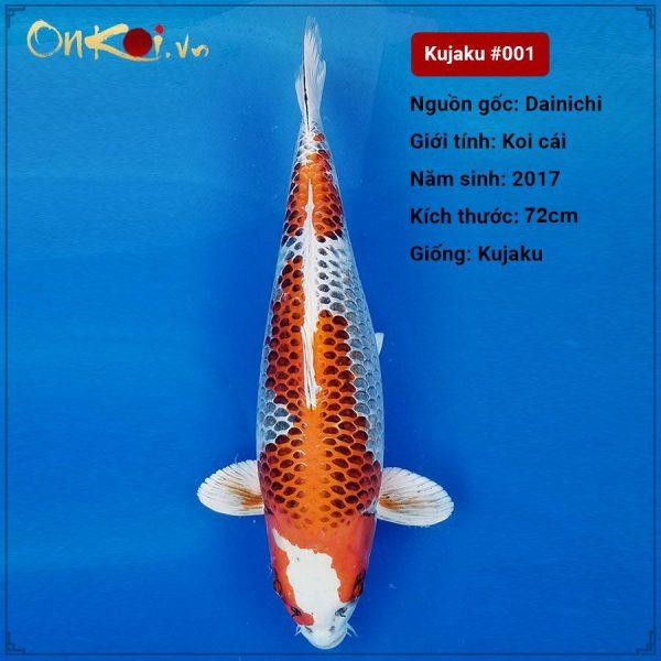 koi Kujaku 71 cm 3 năm tuổi #001