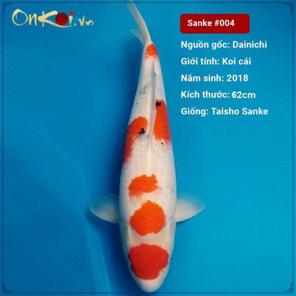 Taisho Sanke 62 cm 2 tuổi #004