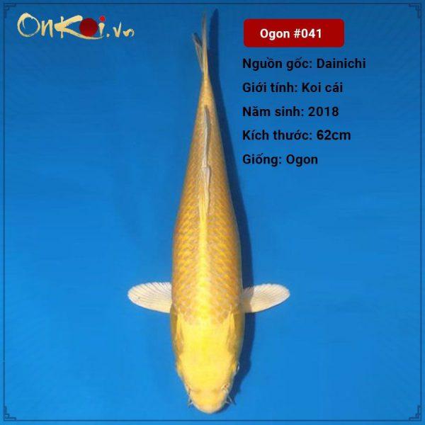 Koi Ogon 62 cm 2 năm tuổi #041