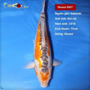 Onkoi-Shusui 75 cm 2.5 tuổi #007