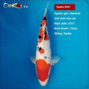 Taisho Shanke 70 cm 3 tuổi nữ #001