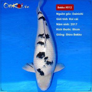 Koi Shiro Bekko 86 cm 3 tuổi #012