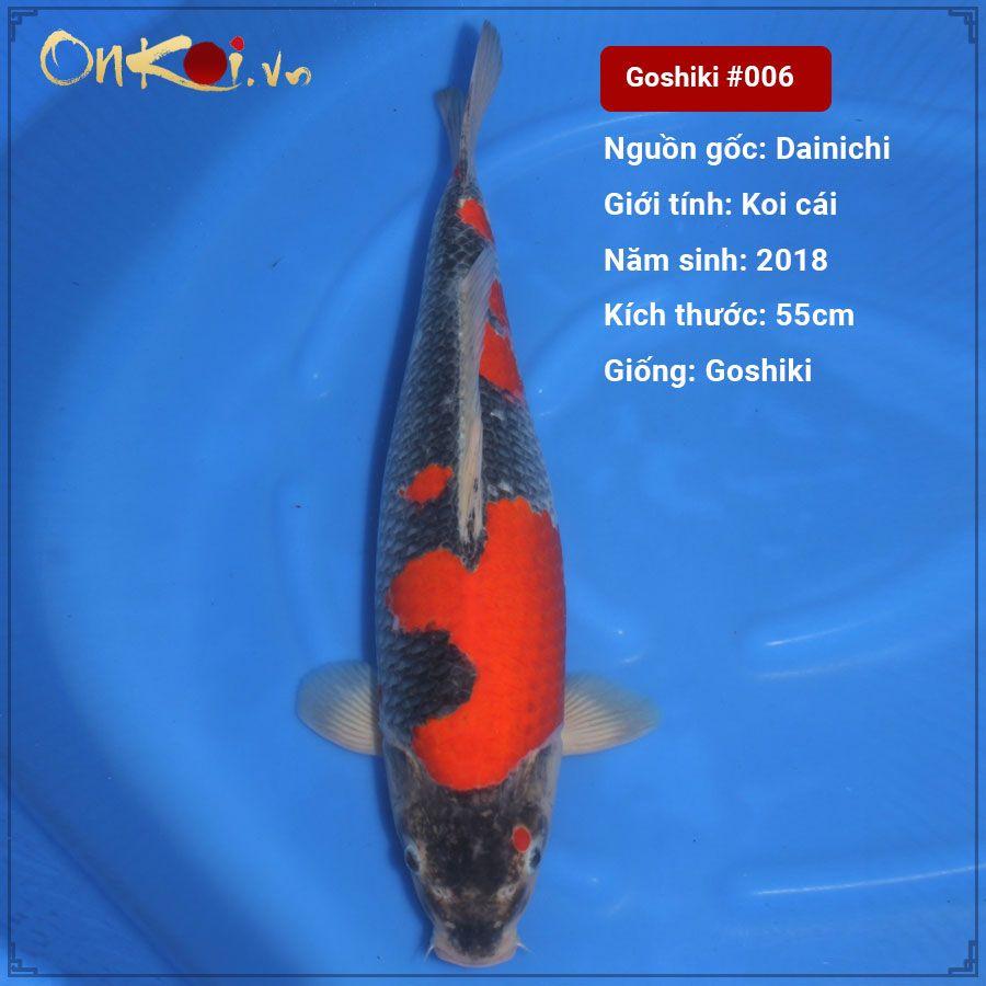 Koi Ginrin Goshiki 2 năm tuổi dài 55cm #006