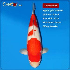 Onkoi Kohaku set 4 con 66 cm 2 tuổi #096