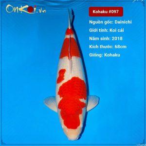 Onkoi Kohaku set 5 con 65-68cm 2 tuổi #097