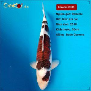 Koi Budo Goromo 62 cm 2 tuổi #005